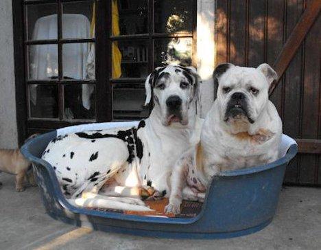 new nouvelle boutique brit en ligne brit croquettes gamme chien et chiot. Black Bedroom Furniture Sets. Home Design Ideas